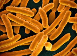 16598492368_a99895c31e_z-gd-bacteria